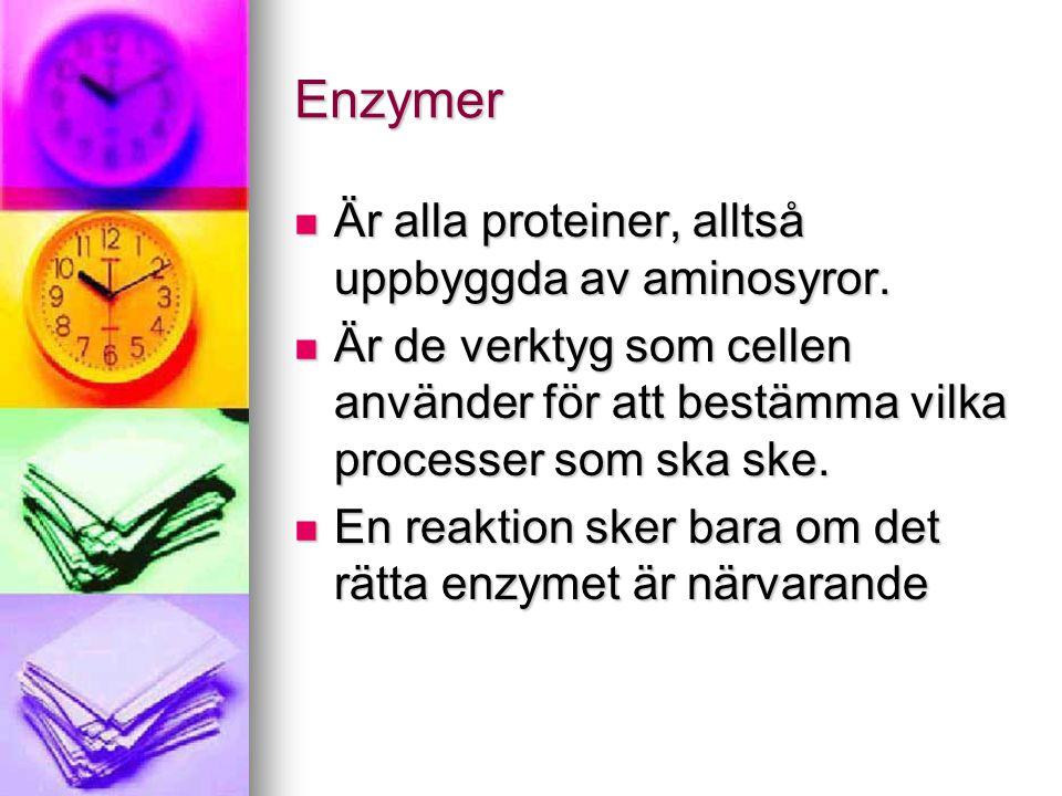 Enzymer  Är alla proteiner, alltså uppbyggda av aminosyror.  Är de verktyg som cellen använder för att bestämma vilka processer som ska ske.  En re