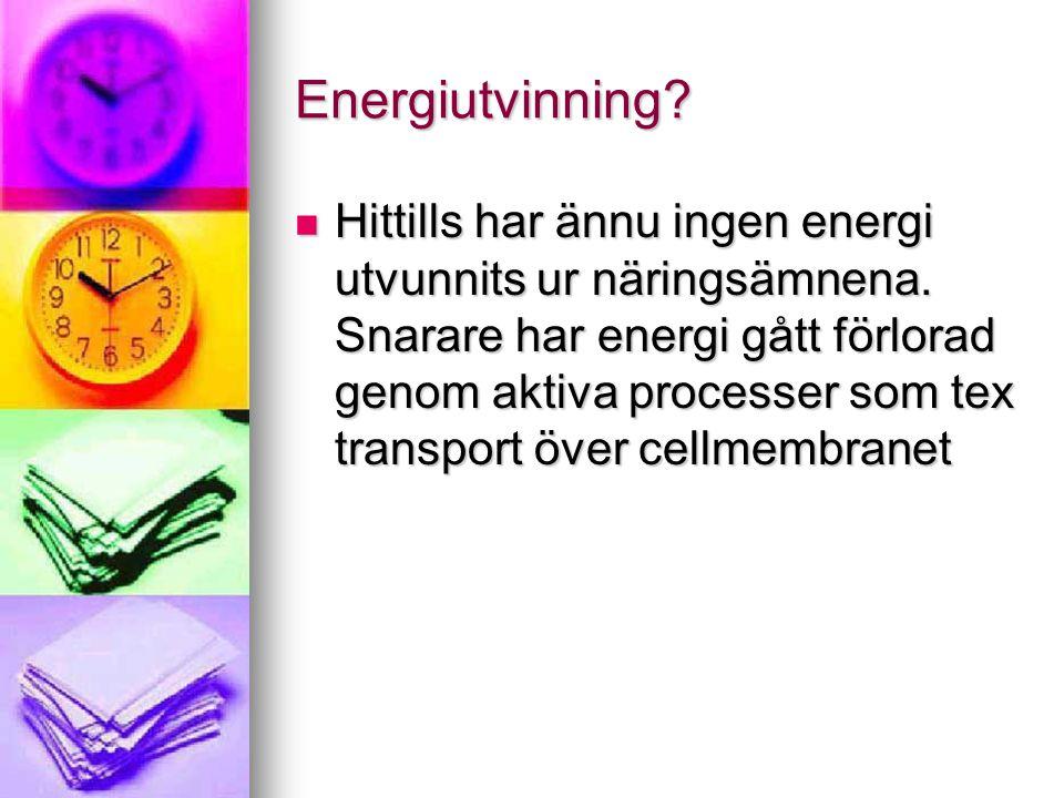 Energiutvinning?  Hittills har ännu ingen energi utvunnits ur näringsämnena. Snarare har energi gått förlorad genom aktiva processer som tex transpor
