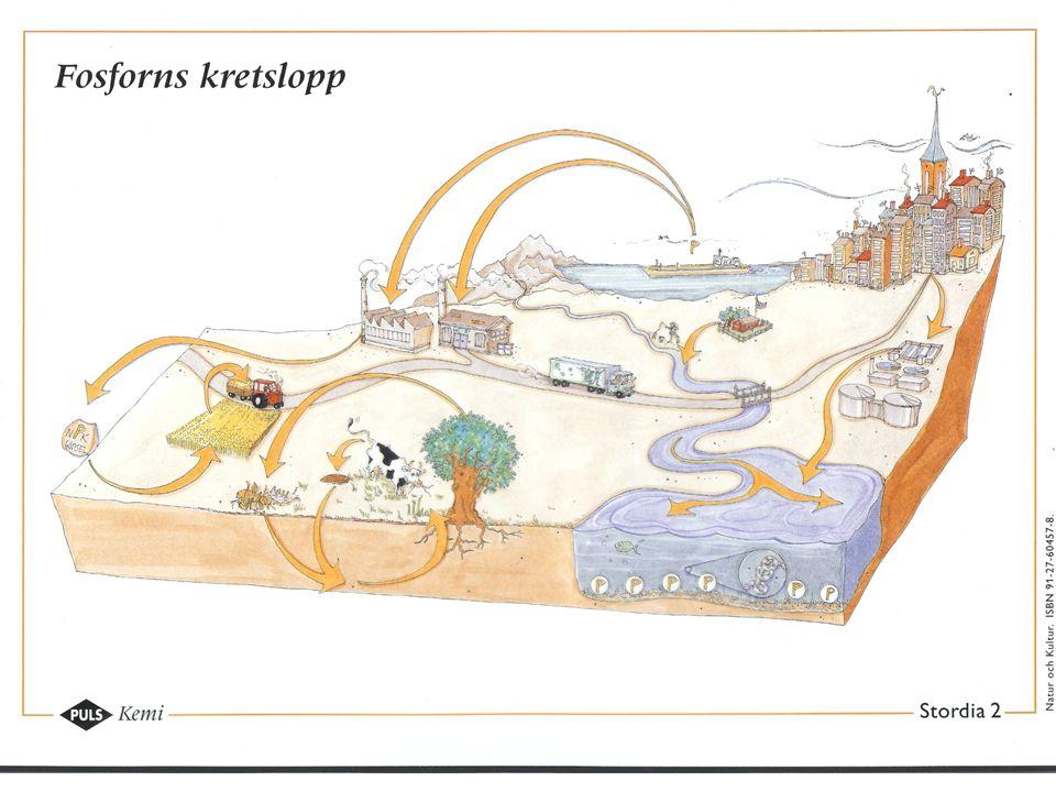 Fosforns kretslopp