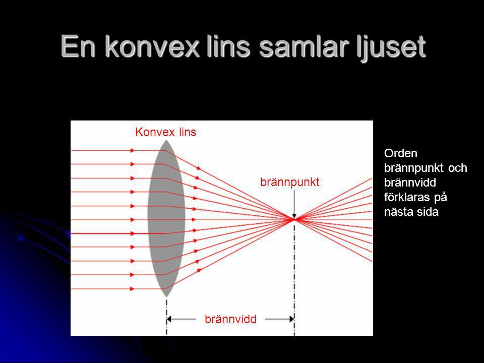 En konvex lins samlar ljuset Konvex lins brännpunkt brännvidd Orden brännpunkt och brännvidd förklaras på nästa sida