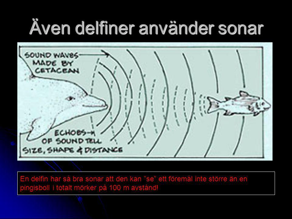 Även delfiner använder sonar En delfin har så bra sonar att den kan se ett föremål inte större än en pingisboll i totalt mörker på 100 m avstånd!