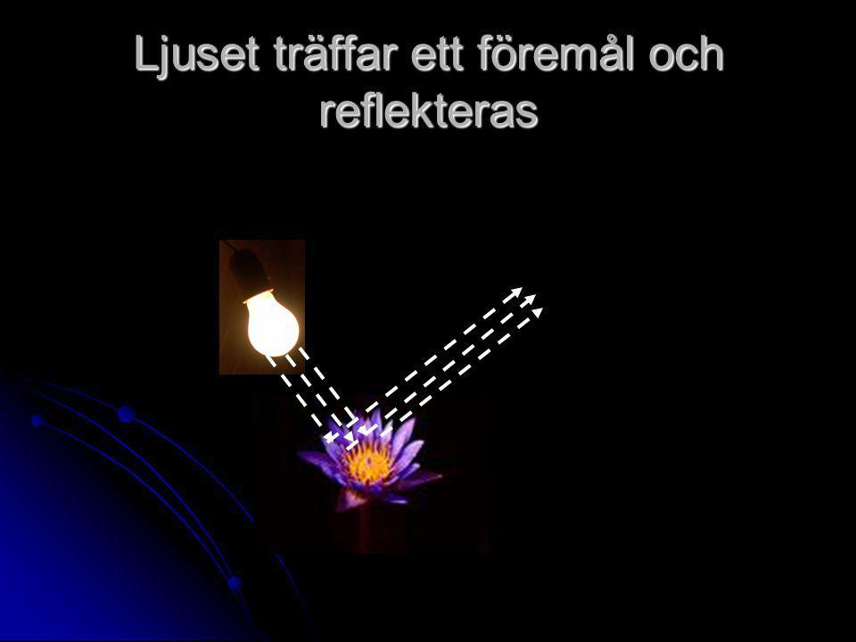 Ljuset träffar ett föremål och reflekteras
