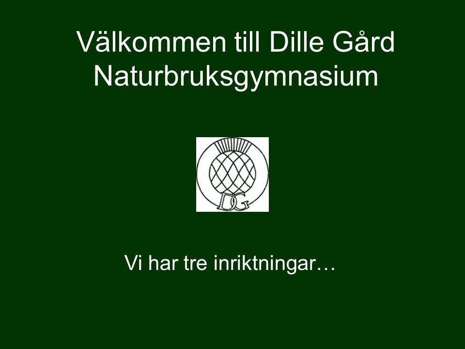 Välkommen till Dille Gård Naturbruksgymnasium Vi har tre inriktningar…