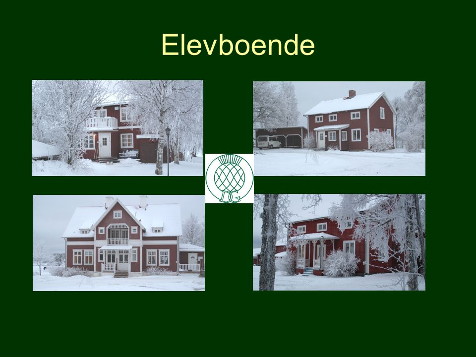 På skolan finns: •Fritidslokal med tv mm •Trådlöst bredband över hela gården •Jakt på egen mark under utbildningen •Fritidsledare som ordnar aktivitet