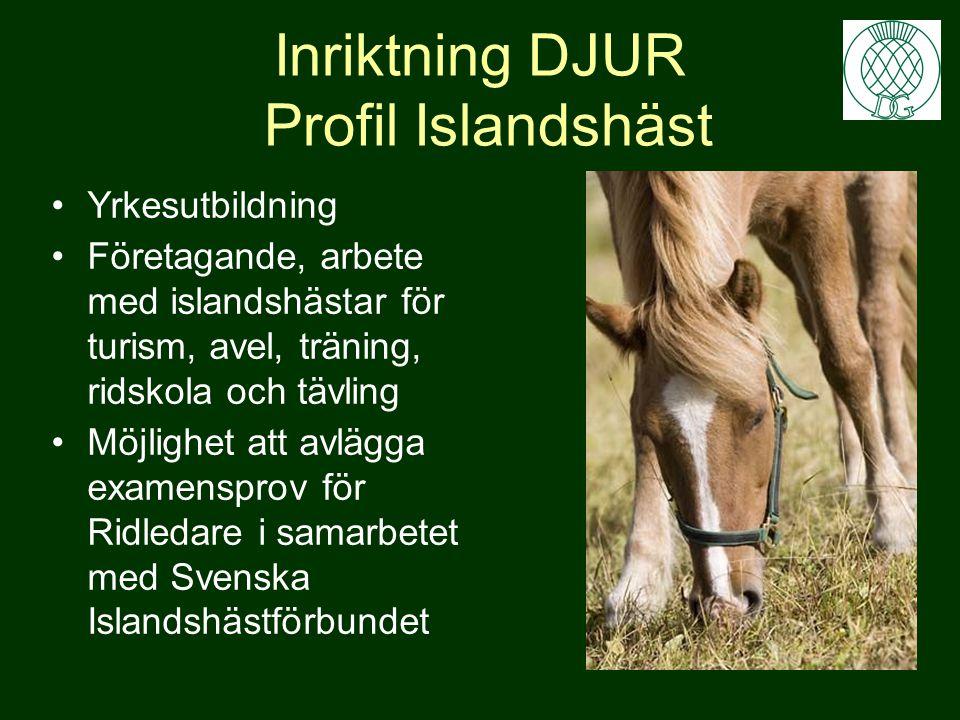 Inriktning DJUR Profil Islandshäst •Yrkesutbildning •Företagande, arbete med islandshästar för turism, avel, träning, ridskola och tävling •Möjlighet att avlägga examensprov för Ridledare i samarbetet med Svenska Islandshästförbundet
