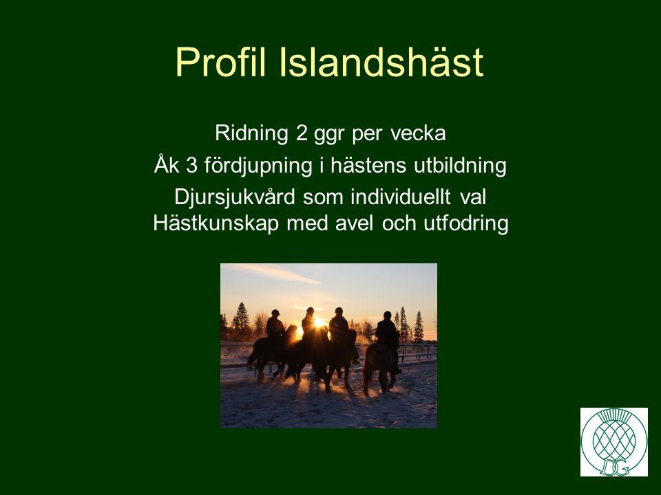 Profil Islandshäst •Möjlighet att avlägga Hästskötarexamen •Grundbehörighet till högskola genom att läsa extra Engelska och Svenska •Särskild behörigh