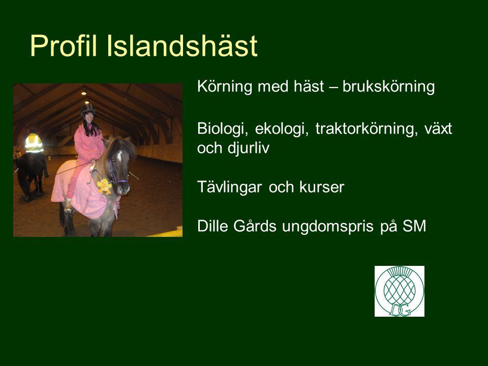 Profil Islandshäst Körning med häst – brukskörning Biologi, ekologi, traktorkörning, växt och djurliv Tävlingar och kurser Dille Gårds ungdomspris på SM