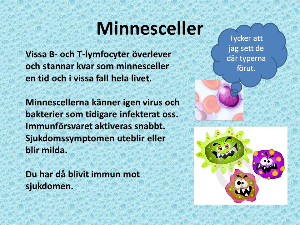 Minnesceller Tycker att jag sett de där typerna förut. Vissa B- och T-lymfocyter överlever och stannar kvar som minnesceller en tid och i vissa fall h