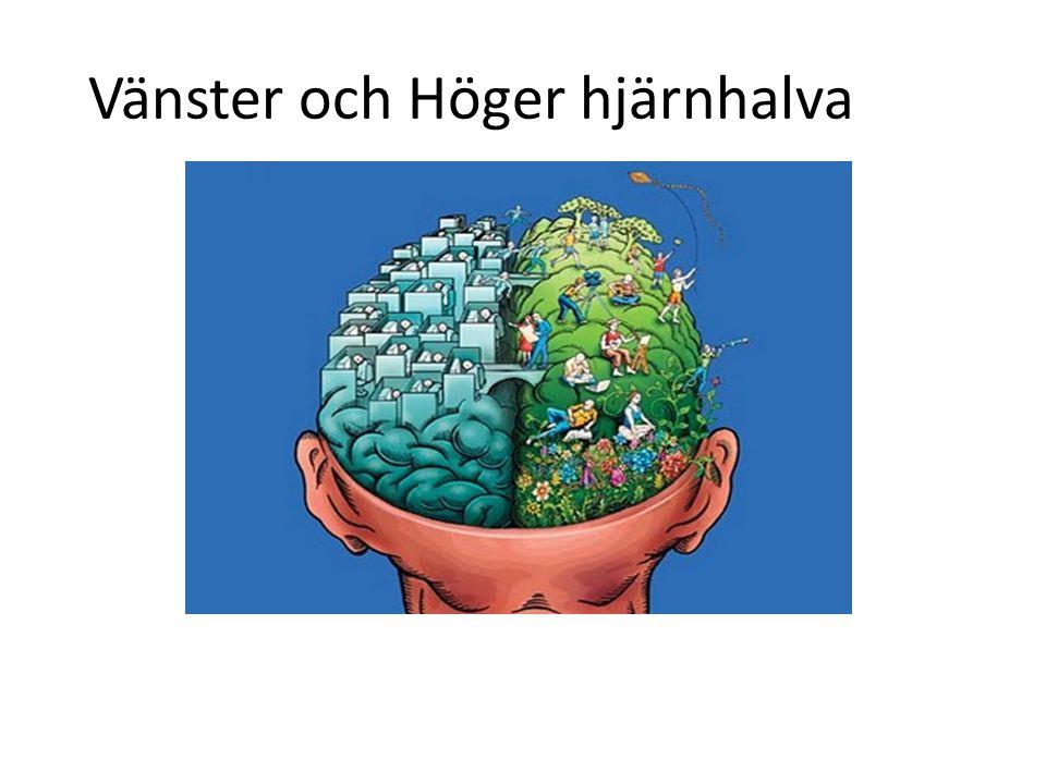 Försök att använda alla sinnen när du lär dig!