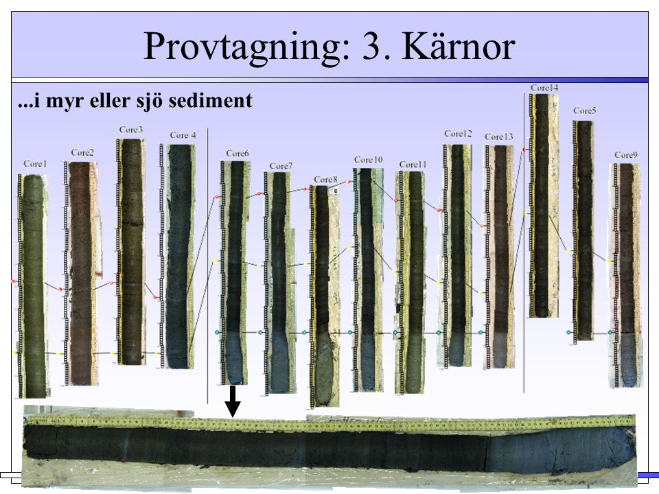 Provtagning: 3. Kärnor...i myr eller sjö sediment