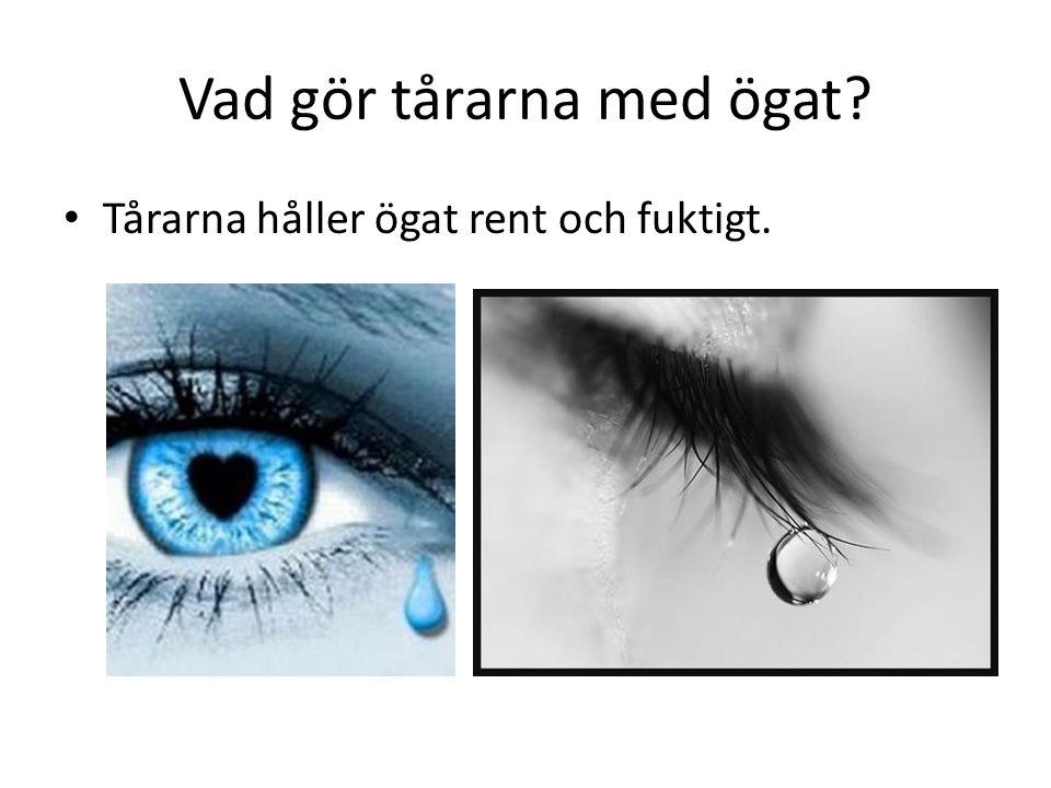 Vad gör tårarna med ögat? • Tårarna håller ögat rent och fuktigt.