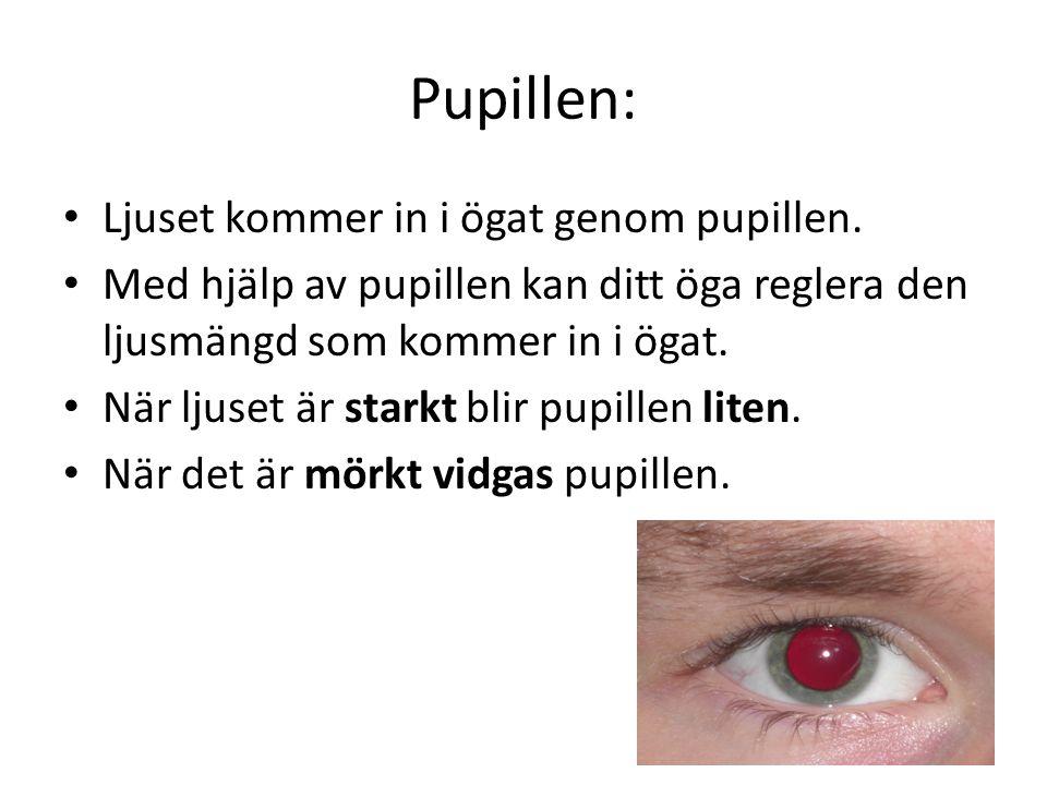 Pupillen: • Ljuset kommer in i ögat genom pupillen. • Med hjälp av pupillen kan ditt öga reglera den ljusmängd som kommer in i ögat. • När ljuset är s