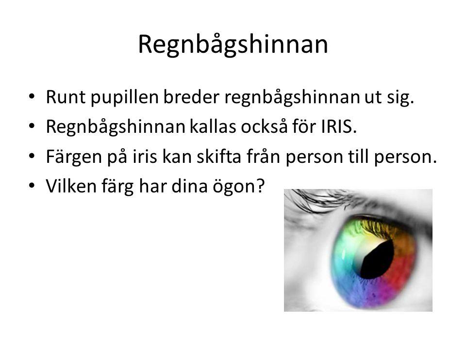 Regnbågshinnan • Runt pupillen breder regnbågshinnan ut sig. • Regnbågshinnan kallas också för IRIS. • Färgen på iris kan skifta från person till pers