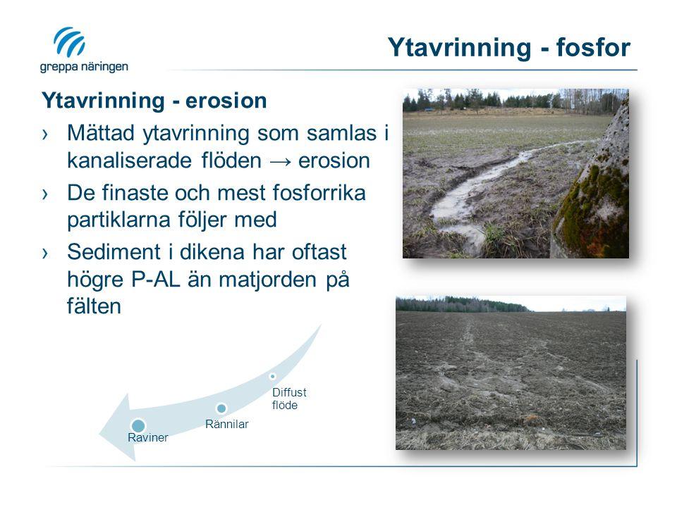 Ytavrinning - fosfor Ytavrinning - erosion ›Mättad ytavrinning som samlas i kanaliserade flöden → erosion ›De finaste och mest fosforrika partiklarna följer med ›Sediment i dikena har oftast högre P-AL än matjorden på fälten Diffust flöde Rännilar Raviner
