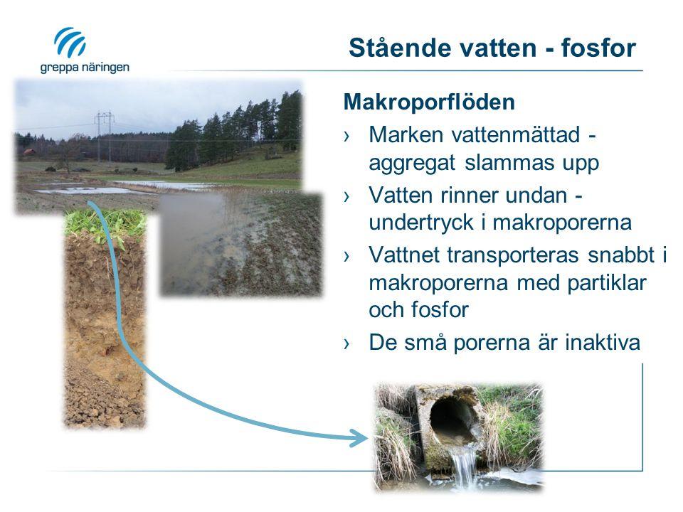 Stående vatten - fosfor Makroporflöden ›Marken vattenmättad - aggregat slammas upp ›Vatten rinner undan - undertryck i makroporerna ›Vattnet transporteras snabbt i makroporerna med partiklar och fosfor ›De små porerna är inaktiva