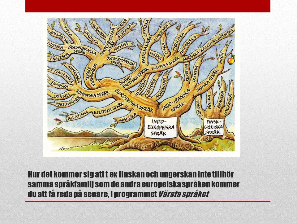 Hur det kommer sig att t ex finskan och ungerskan inte tillhör samma språkfamilj som de andra europeiska språken kommer du att få reda på senare, i programmet Värsta språket