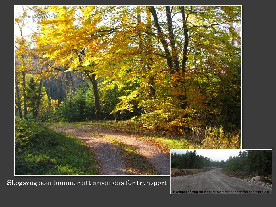 Skogsväg som kommer att användas för transport