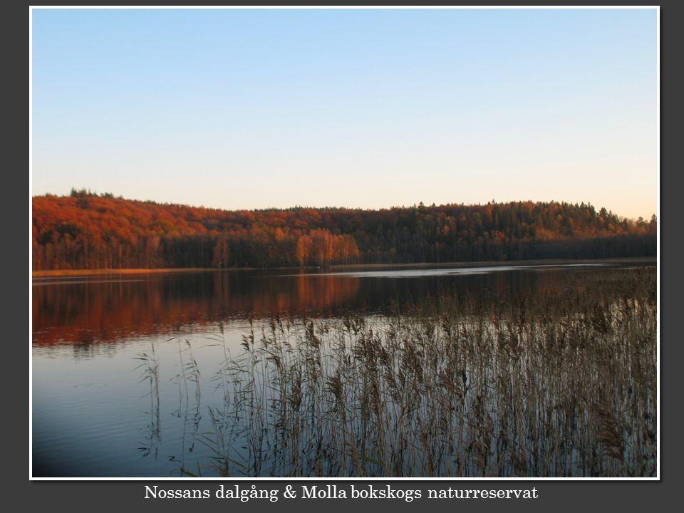 Nossans dalgång & Molla bokskogs naturreservat