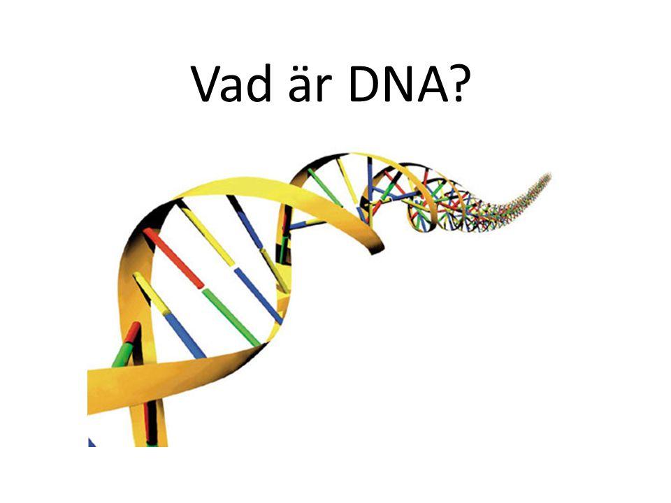 Vad är DNA?