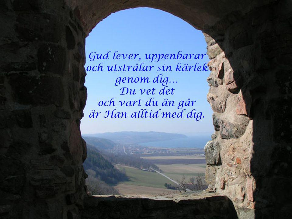 Gud söker dig och Han finner dig. Upplev Honom ta emot Honom Och låt dig ledas till det liv av lycka som väntar dig.