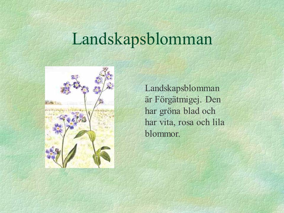 Landskapsblomman Landskapsblomman är Förgätmigej. Den har gröna blad och har vita, rosa och lila blommor.