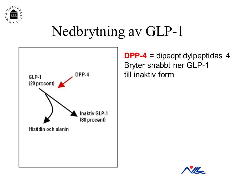 Nedbrytning av GLP-1 DPP-4 = dipedptidylpeptidas 4 Bryter snabbt ner GLP-1 till inaktiv form