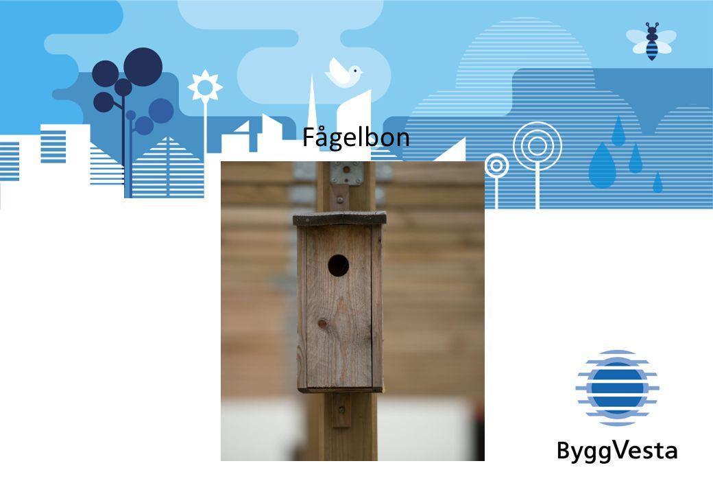 Fågelbon