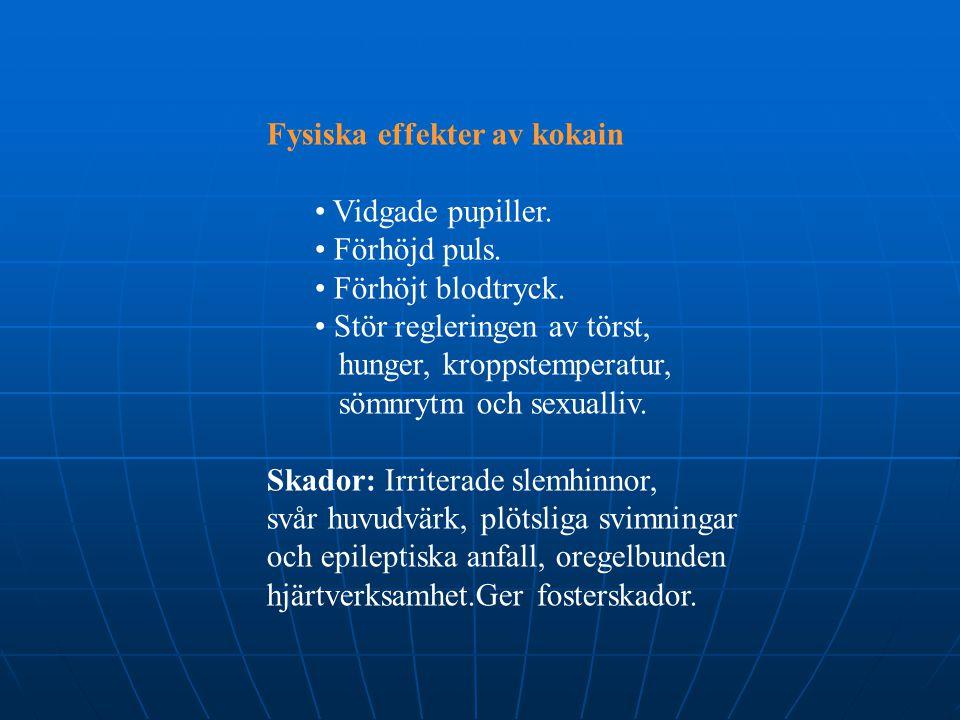 Fysiska effekter av kokain • Vidgade pupiller. • Förhöjd puls. • Förhöjt blodtryck. • Stör regleringen av törst, hunger, kroppstemperatur, sömnrytm oc