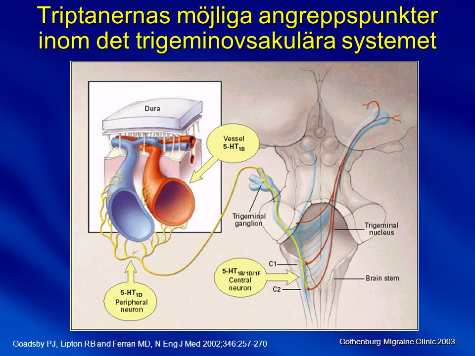 Gothenburg Migraine Clinic 2003 Goadsby PJ, Lipton RB and Ferrari MD, N Eng J Med 2002;346:257-270 Triptanernas möjliga angreppspunkter inom det trigeminovsakulära systemet