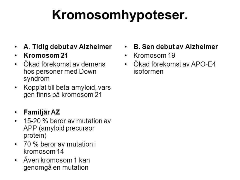 Kromosomhypoteser. •A. Tidig debut av Alzheimer •Kromosom 21 •Ökad förekomst av demens hos personer med Down syndrom •Kopplat till beta-amyloid, vars