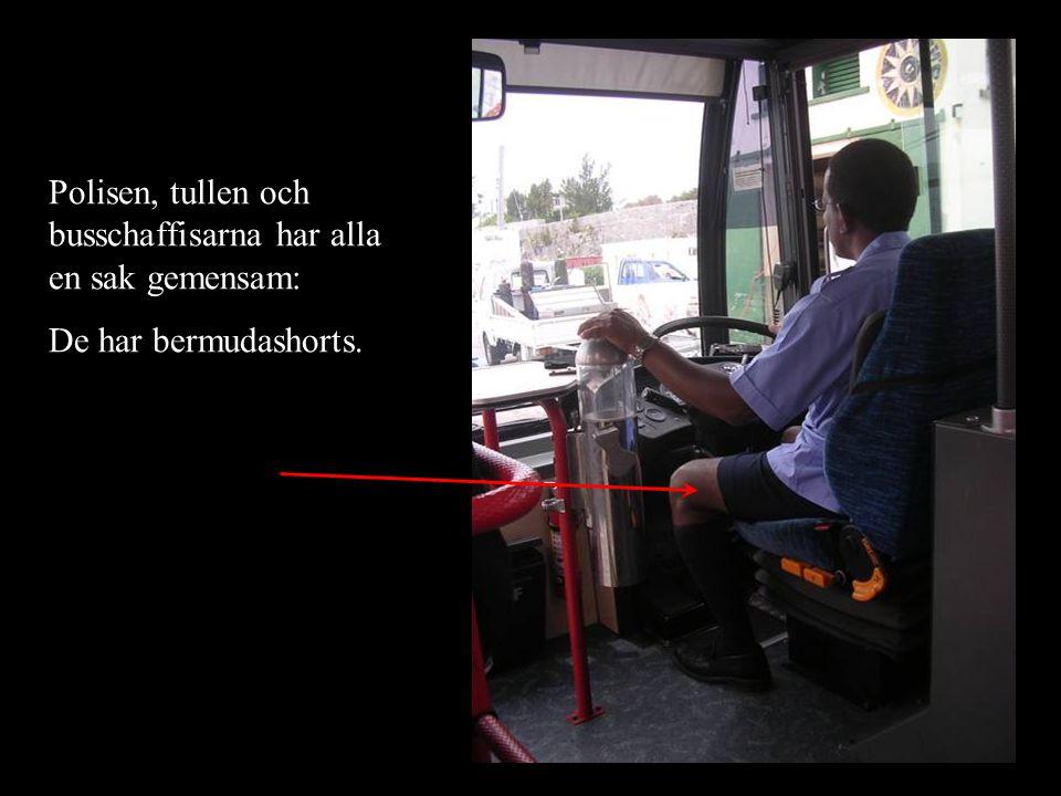 Polisen, tullen och busschaffisarna har alla en sak gemensam: De har bermudashorts.