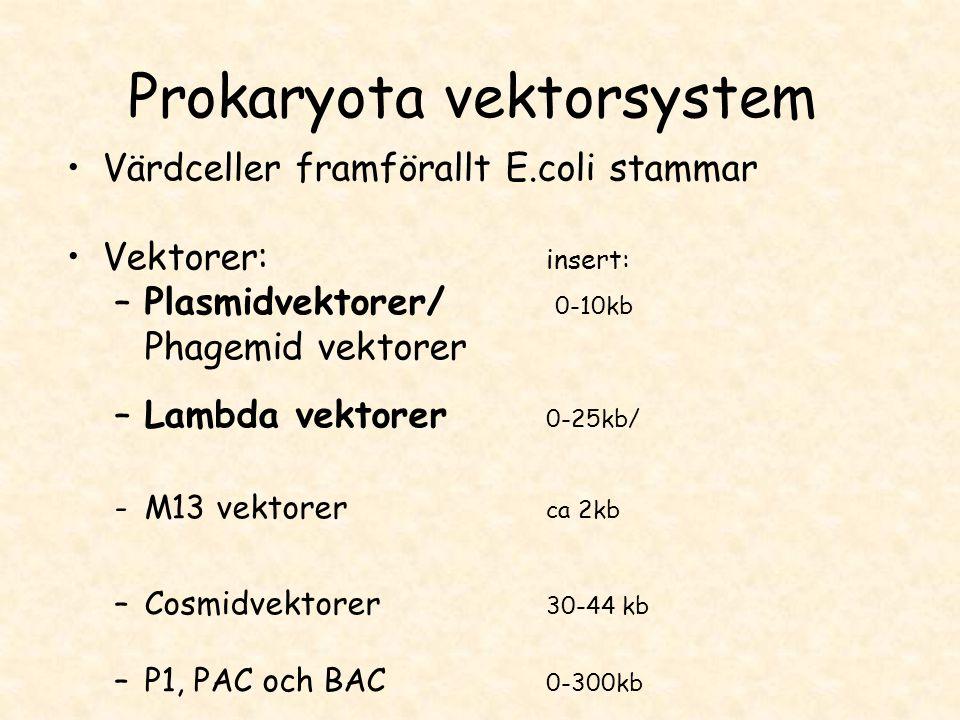 Prokaryota vektorsystem •Värdceller framförallt E.coli stammar •Vektorer: insert: –Plasmidvektorer/ 0-10kb Phagemid vektorer –Lambda vektorer 0-25kb/