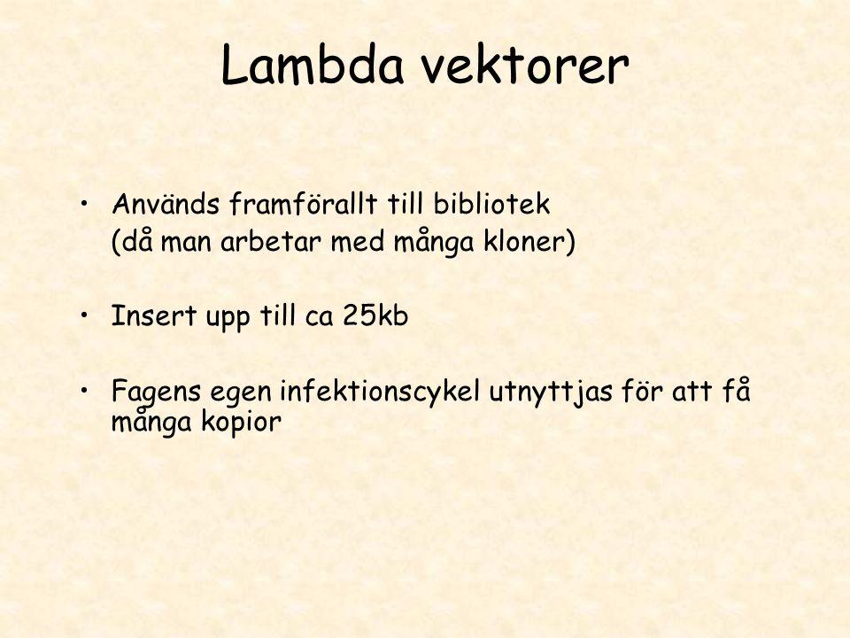 Lambda vektorer •Används framförallt till bibliotek (då man arbetar med många kloner) •Insert upp till ca 25kb •Fagens egen infektionscykel utnyttjas
