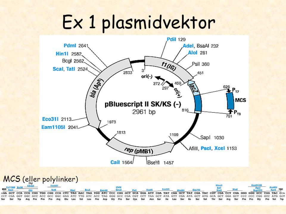 Ex 1 plasmidvektor MCS (eller polylinker)