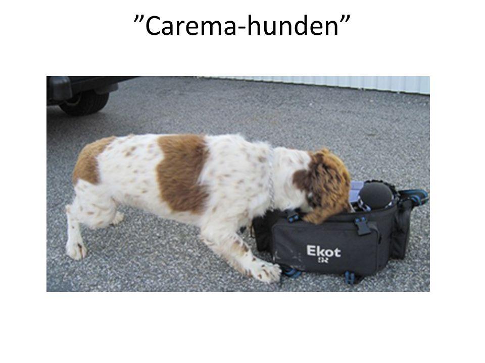 """""""Carema-hunden"""""""
