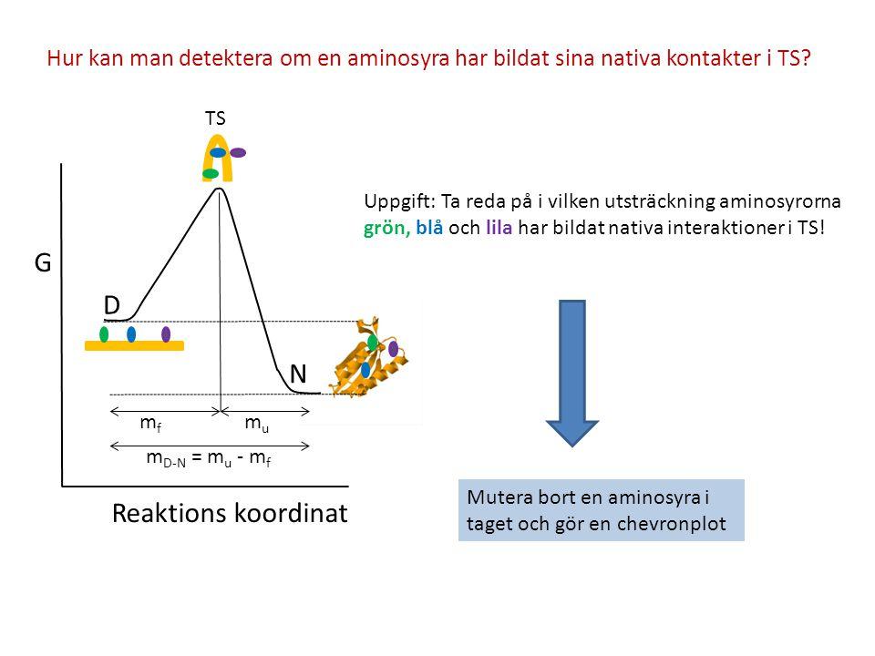 Hur kan man detektera om en aminosyra har bildat sina nativa kontakter i TS? G D N Reaktions koordinat mfmf mumu m D-N = m u - m f TS Uppgift: Ta reda