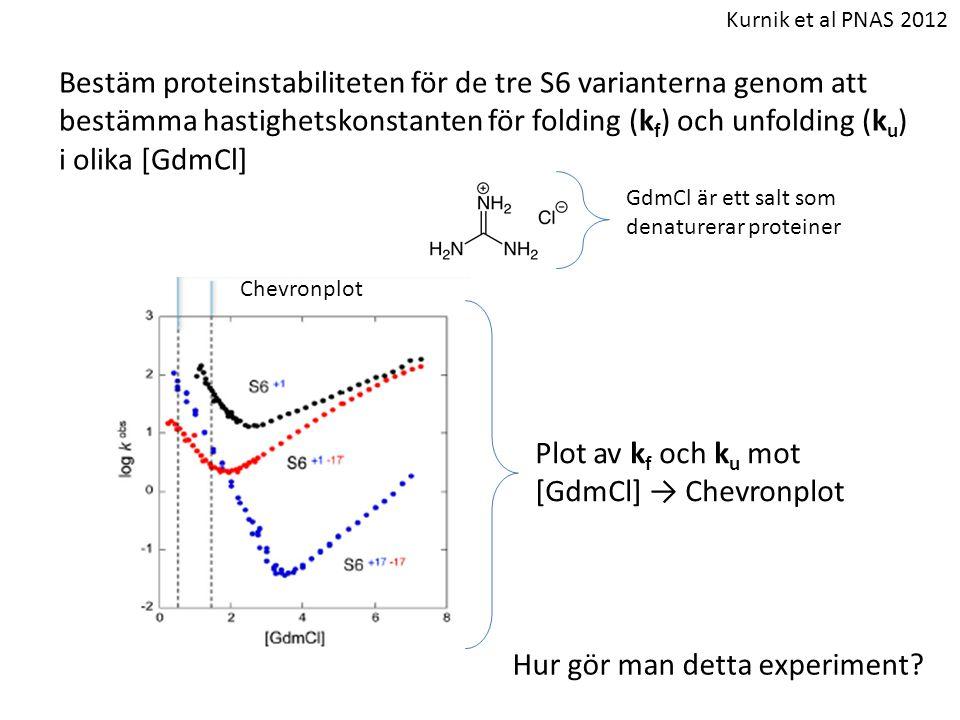 Bestäm proteinstabiliteten för de tre S6 varianterna genom att bestämma hastighetskonstanten för folding (k f ) och unfolding (k u ) i olika [GdmCl] H
