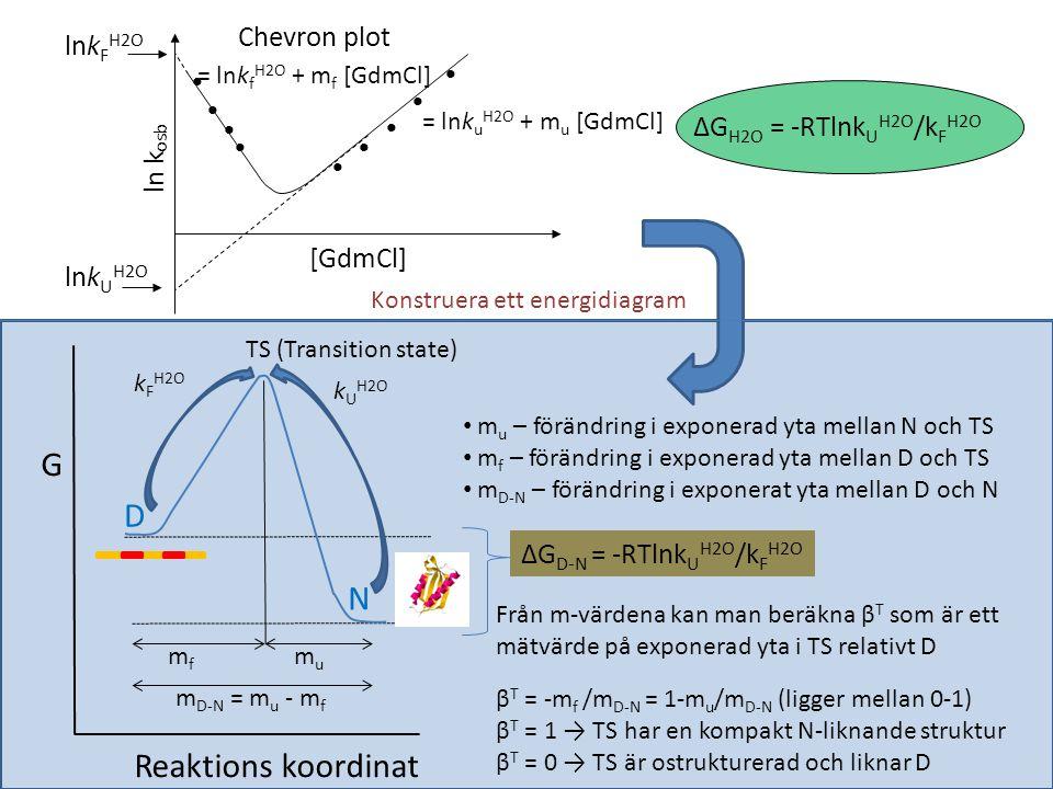 Kinetiska parametrar och proteinstabilitet från chevronplot S6 WT S6 +1-17 S6 +1 Energidiagram relativt det denaturerade tillståndet D • Energinivån för N bestäms från ΔG D-N H2O • Höjden på aktiveringsbarriären bestäms från k f • Positionerna för D, TS och N längst reaktions koordinaten är bestämda från m-värderna och normaliserade till N Kurnik et al PNAS 2012 TS