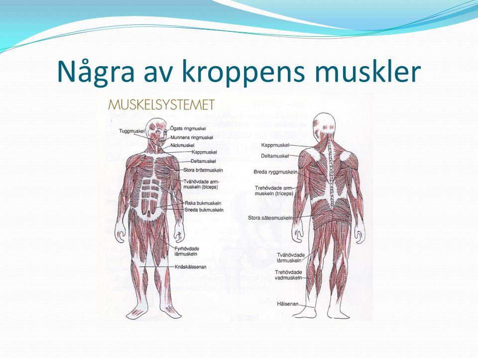 Några av kroppens muskler