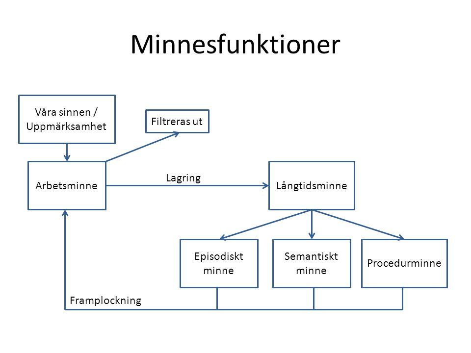 Minnesfunktioner Våra sinnen / Uppmärksamhet ArbetsminneLångtidsminne Episodiskt minne Semantiskt minne Procedurminne Lagring Framplockning Filtreras
