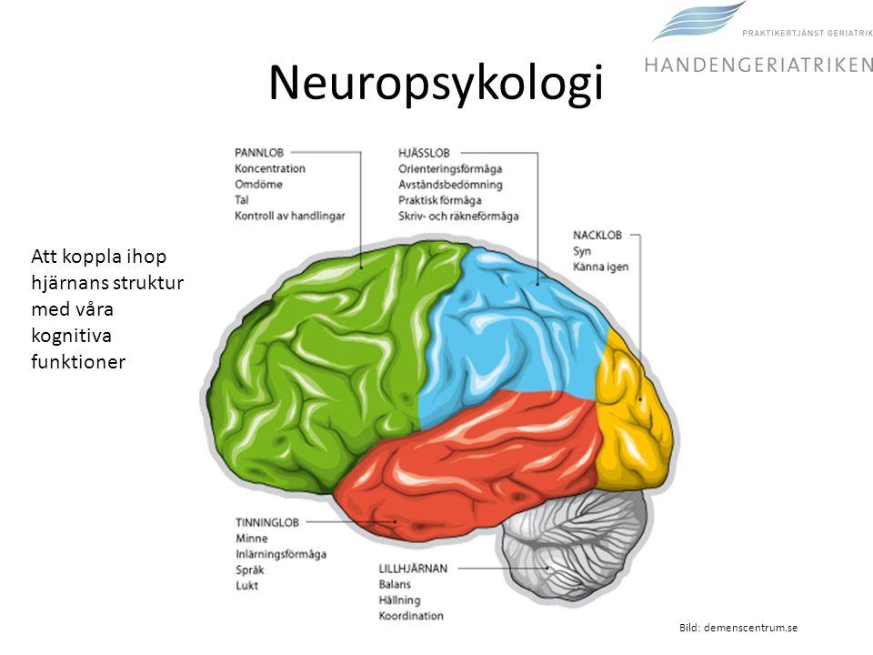 Neuropsykologi Bild: demenscentrum.se Att koppla ihop hjärnans struktur med våra kognitiva funktioner