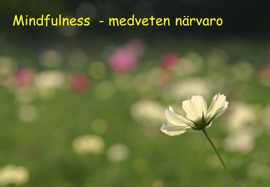 25 Mindfulness - medveten närvaro