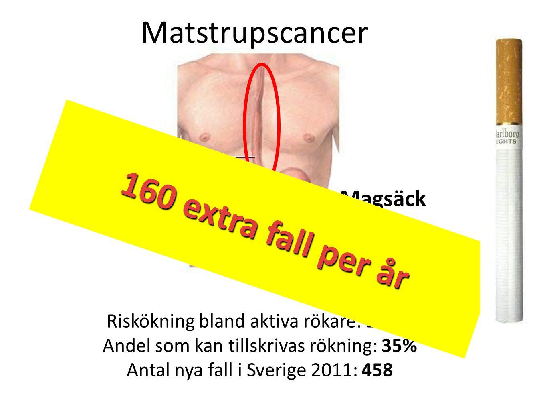 Matstrupscancer Matstrupe Magsäck Riskökning bland aktiva rökare: 250% Andel som kan tillskrivas rökning: 35% Antal nya fall i Sverige 2011: 458 160 e
