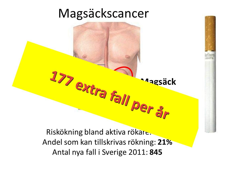 Magsäckscancer Matstrupe Magsäck Riskökning bland aktiva rökare: 87% Andel som kan tillskrivas rökning: 21% Antal nya fall i Sverige 2011: 845 177 ext
