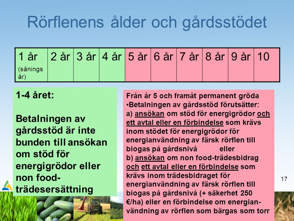 17 Rörflenens ålder och gårdsstödet 1 år (sånings år) 2 år3 år4 år5 år6 år7 år8 år9 år10 Från år 5 och framåt permanent gröda •Betalningen av gårdsstöd förutsätter: a) ansökan om stöd för energigrödor och ett avtal eller en förbindelse som krävs inom stödet för energigrödor för energianvändning av färsk rörflen till biogas på gårdsnivå eller b) ansökan om non food-trädesbidrag och ett avtal eller en förbindelse som krävs inom trädesbidraget för energianvändning av färsk rörflen till biogas på gårdsnivå (+ säkerhet 250 €/ha) eller en förbindelse om energian- vändning av rörflen som bärgas som torr 1-4 året: Betalningen av gårdsstöd är inte bunden till ansökan om stöd för energigrödor eller non food- trädesersättning