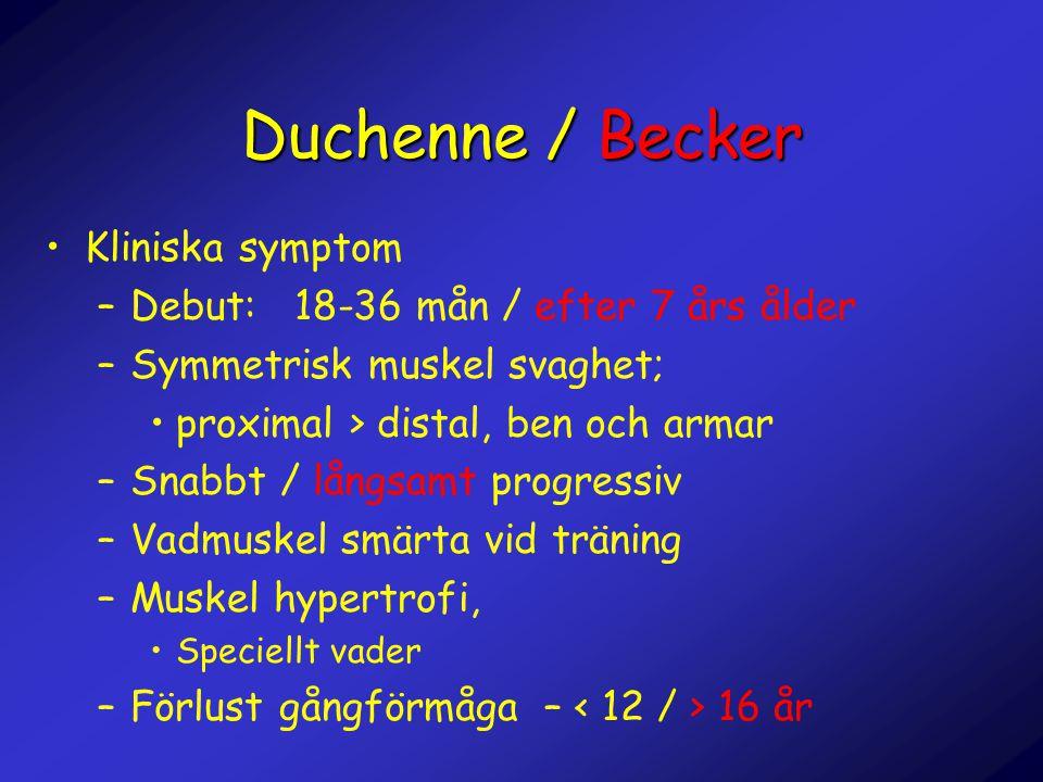 Duchenne / Becker •Kliniska symptom –Debut: 18-36 mån / efter 7 års ålder –Symmetrisk muskel svaghet; •proximal > distal, ben och armar –Snabbt / lång