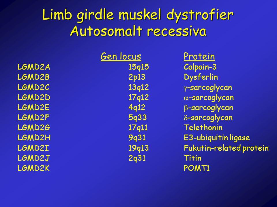 Limb girdle muskel dystrofier Autosomalt recessiva Gen locusProtein LGMD2A15q15Calpain-3 LGMD2B2p13Dysferlin LGMD2C13q12  -sarcoglycan LGMD2D17q12 