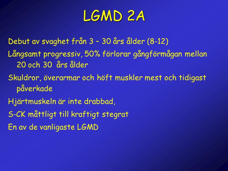 LGMD 2A Debut av svaghet från 3 – 30 års ålder (8-12) Långsamt progressiv, 50% förlorar gångförmågan mellan 20 och 30 års ålder Skuldror, överarmar oc