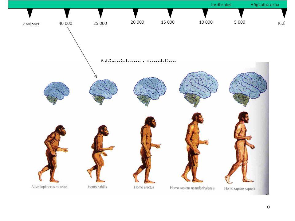 6 Människans utveckling 2 miljoner 40 00025 000 20 00015 00010 000 5 000 Kr.f. JordbruketHögkulturerna