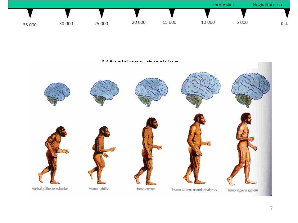 7 Människans utveckling 35 000 30 00025 000 20 00015 00010 000 5 000 Kr.f. JordbruketHögkulturerna